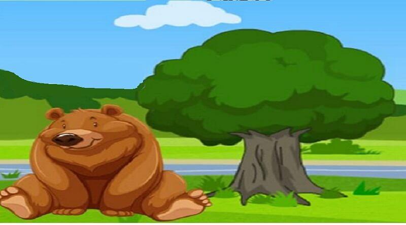 hırsız ayı