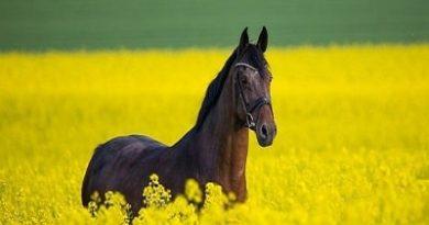 Atların Özellikleri