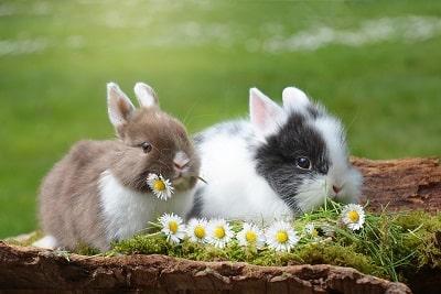 tavşanların özellikleri