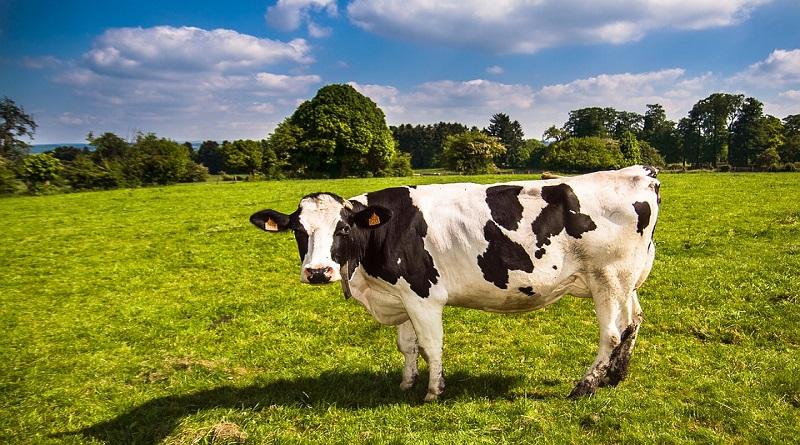 ineklerin özellikleri