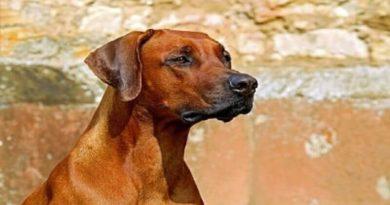 köpeklerin özellikleri