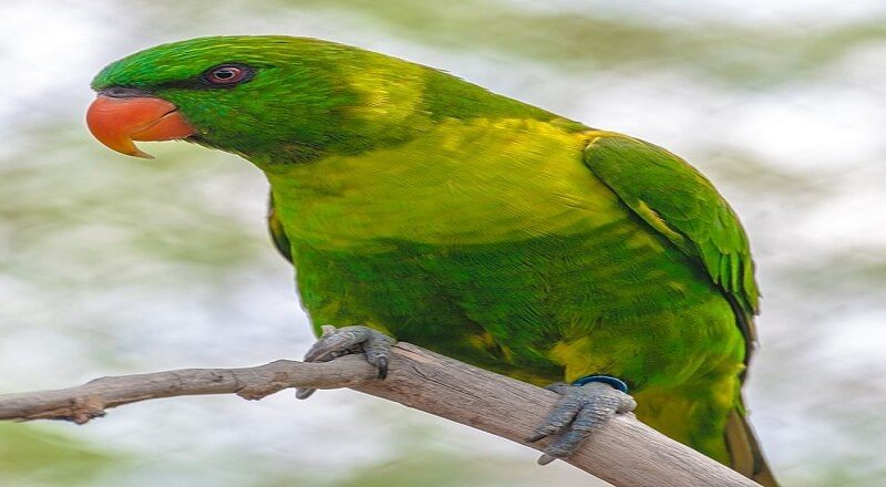 Vicious Bird Fairy Tale