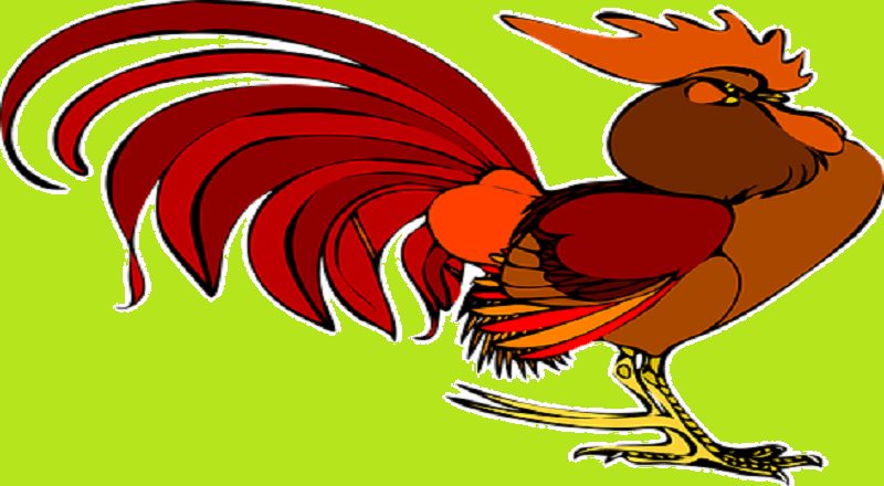 The Immortal Rooster