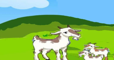 keçi ile iki yavrusu