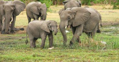 fillerin özellikleri nelerdir