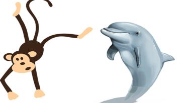 Maymun ve Yunus Balığı