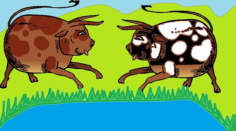 boğalar ve kurbağalar