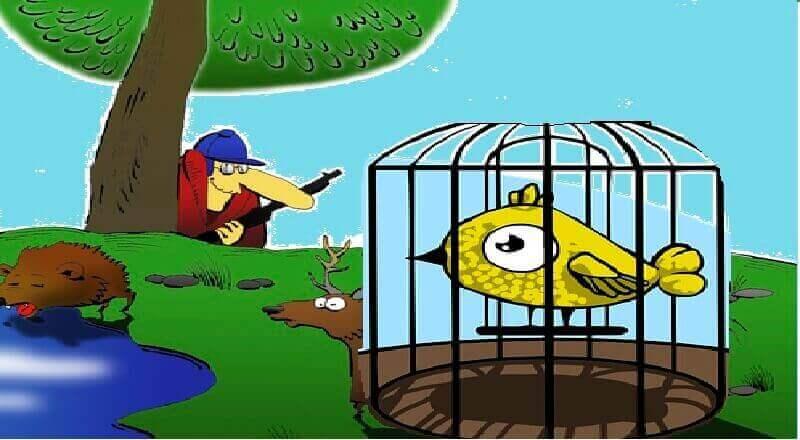 aptal kuşun başına gelenler