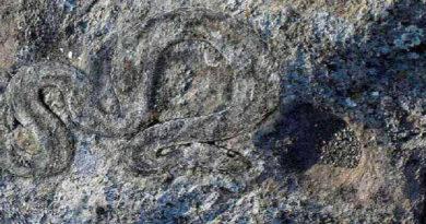 define yılan işareti anlamı ve çözümü