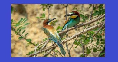 Arı Kuşlarının Özellikleri Nelerdir