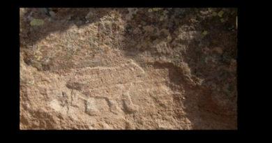 Definede Topal Ayı ve Ayı Pençesi işareti Çözümü