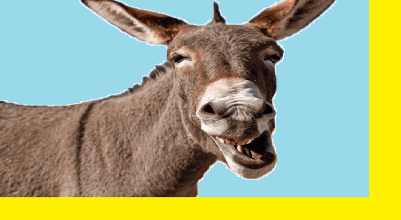 Guitarist Donkey Karakachan Fairy Tale