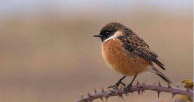 Avcı ile Küçük Kuşun Üç Öğüdü Hikayesi