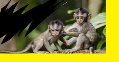 Maymuna Dönüşen Çocuklar Masalı
