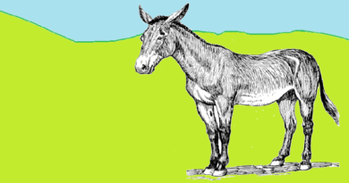 Mule and Camel Story