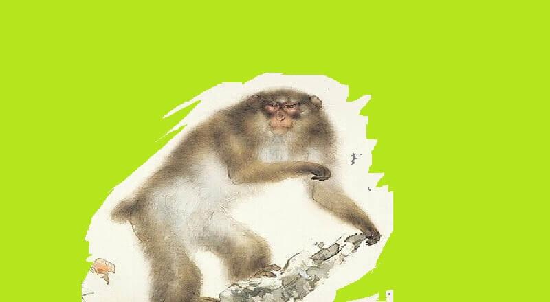 Yaşlı Maymun ve Bilge Yaban Domuzu