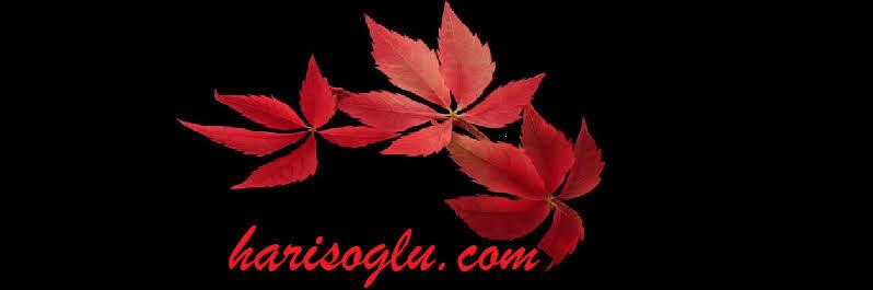 harisoglu.com